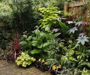 Shade Loving Garden