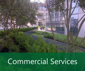 Commercial Garden And Grounds Maintenance